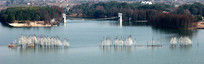 湖泊树林水岸鸟景
