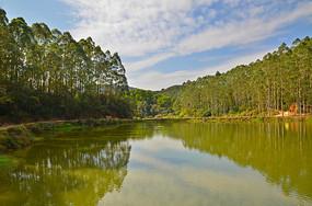 美丽的湖泊树林风景
