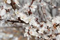 桃花林里的几朵桃花特写
