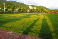 亚龙湾的草坪