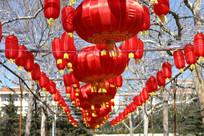 喜庆的红灯笼