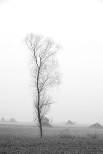 田野里的一棵树