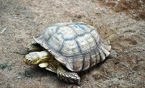 爬行的海龟