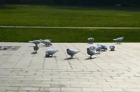 公园广场上的鸽子