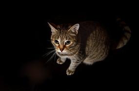 猫咪艺术照
