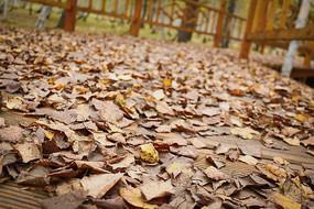 深秋的落葉