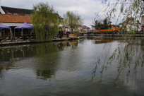 池塘河岸垂柳绿