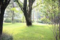 绿草与树木之间