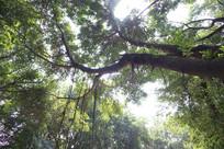 大森林里的树木