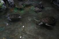 海洋馆里的海龟