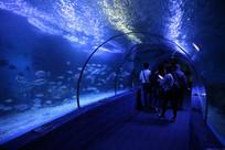 海洋馆里海底世界
