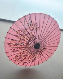 日本樱花和伞