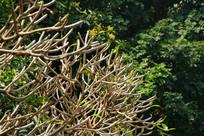 公园繁盛枝丫长出嫩芽与茂密大树