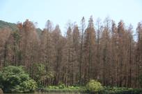自然风景森林景观