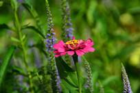 红色的小花在草丛中独立