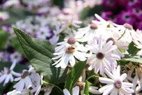 白色花朵特写