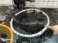海鲜市场石斑鱼