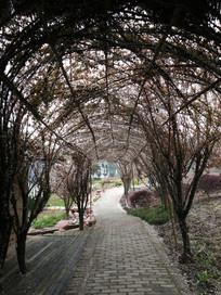 园林里树枝编制的拱门道路