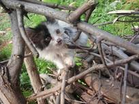 木柴下的小猫图片