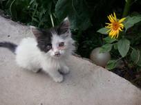 向日葵旁的小猫图片