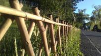 阳光下的篱笆图片