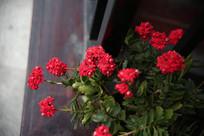 一朵朵簇拥的小红花
