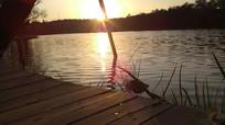 水面上的金色阳光图片