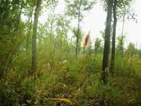 树林里的草毛图片