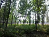 小树林子图片