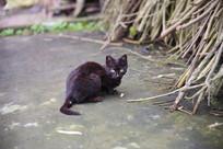 一只半爬着的黑猫