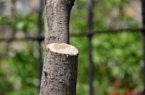 被砍掉树枝的树干