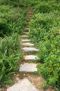 草丛石阶路