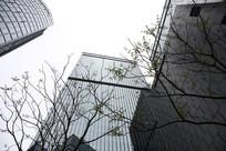 树荫下的高楼大厦