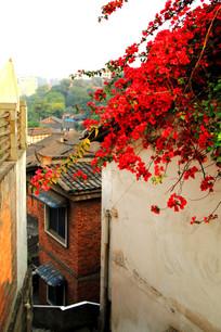 金色夕阳下的红花