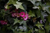 绿叶中的小花朵