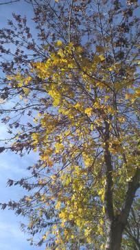 秋天的颜色图片