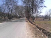 乡村小道图片