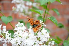 漂亮的蝴蝶