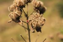 秋天的野生植物