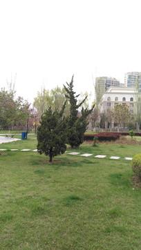 松树风景图片