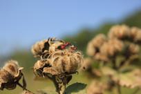 野生植物与红蚂蚁