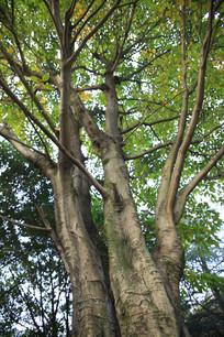 长青苔的树干
