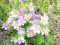 电脑画《梦幻野花》