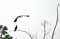 枝头上的鹭鸟与飞翔的鹭鸟