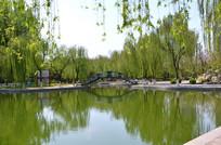春天公园池塘边风景