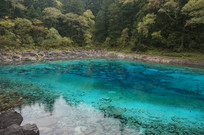 丛林中碧蓝池塘