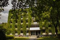 绿藤覆盖的大楼