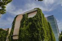 同济绿色大楼