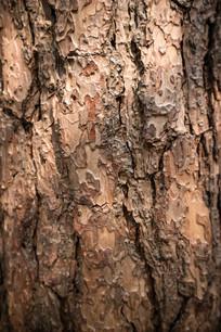 松树皮纹理
