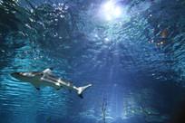泰国暹罗海底世界